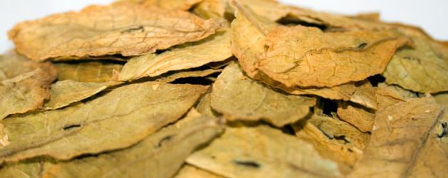 Tabacco orientale (fonte www.yesmoke.eu)